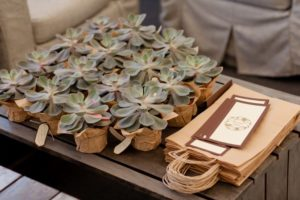 Succulents as wedding favors.